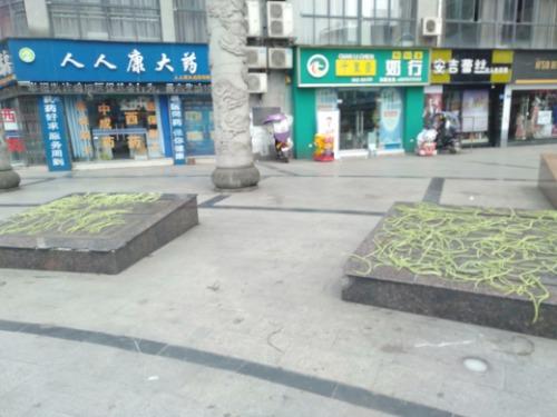 没文化的扬武坊文化广场